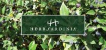 Recensione cosmetici eco-bio Herbsardinia!