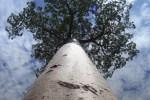 albero 150x100