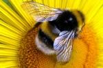 Beemy-Honey_evidenza