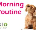 morning_routine_eco_bio_evidenza