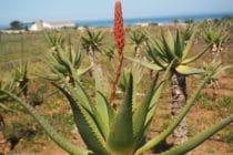 Prodotti con Aloe Vera: ecco Aloe VonDerWeid